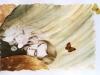 derams-50-70cm-pencil-and-watercolor